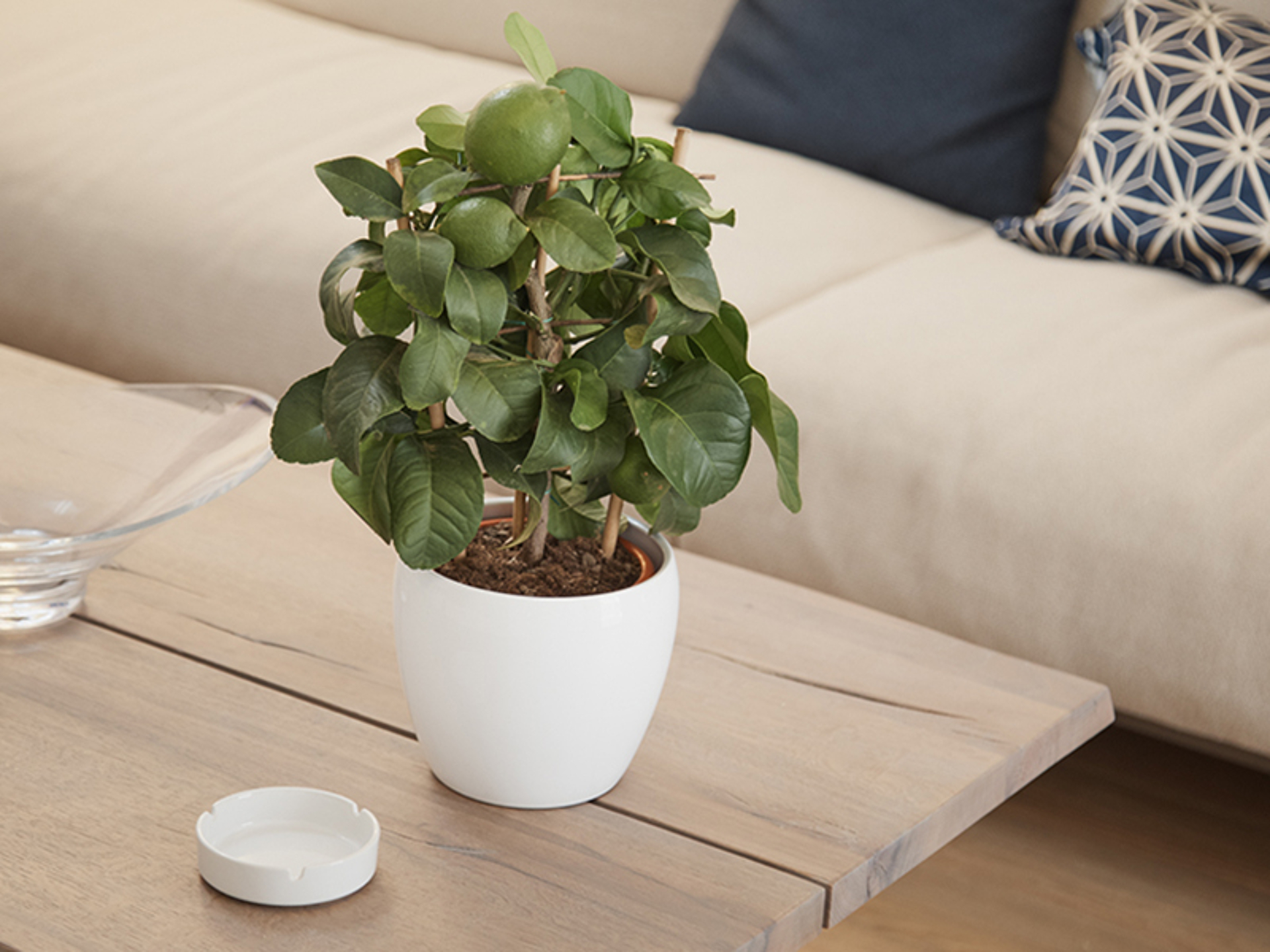 giambo-piante
